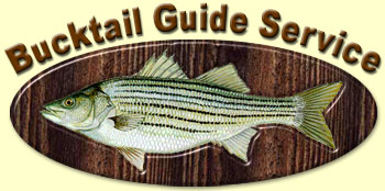 Bucktail Striper & Hybrid Bass Fishing Guide Service